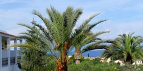 Paradise Hotel Corfu - Όλες οι Προσφορές